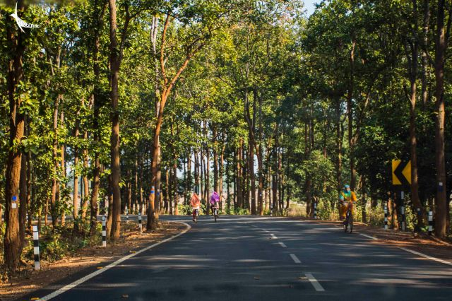 The road through the forest of Sal trees
