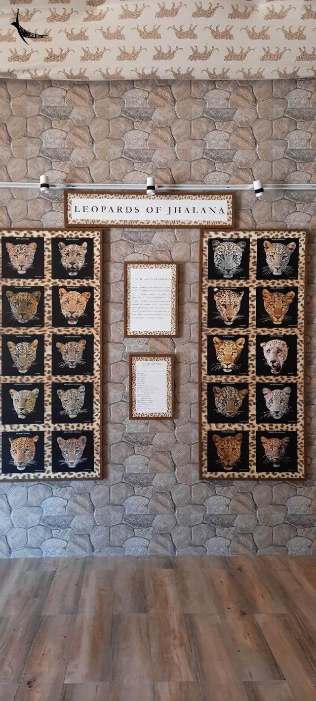 Leopards of Jhalana